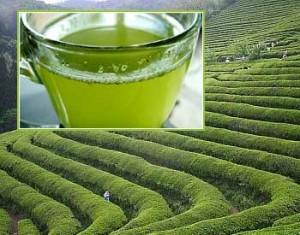 Thé vert antioxydant puissant : à consommer sans modération